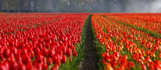 Holendrzy – mentalność ludzi z kraju wiatraków i tulipanów
